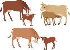 Free Cows Stock Photos - 50334813