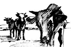 Cows royalty free illustration