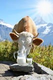 Cows in Alpine meadow. Royalty Free Stock Images