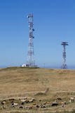 Cows and antennas Royalty Free Stock Images