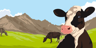 Cows on a background of nature and mountains Stock Photo