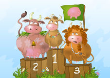 Cows at beauty competition vector illustration