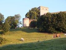 Cows beneath a castle Royalty Free Stock Photos