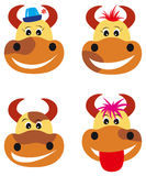 Cows and bull. Four cheerful cows and bull vector illustration