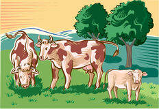 Cows and calf. In the pasture Royalty Free Stock Photo