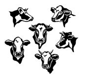 Cows Cattle Portraits. Silhouettes set Royalty Free Stock Image