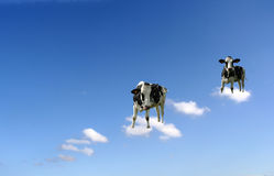 Cows on clouds stock image