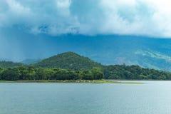 Cows eating grass along the Huai Pa Daeng Reservoir. royalty free stock photography