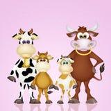 Cows family Stock Photos