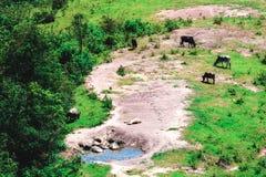 Cows Farm mountain Royalty Free Stock Photography