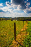 Cows and fence in a farm field in rural York County, Pennsylvani Stock Images