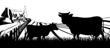 Cows field concept Stock Photos