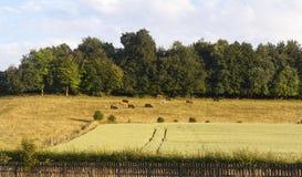 english countryside uk Royalty Free Stock Photography