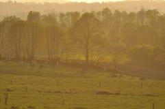 Cows.fields und Bäume an der Dämmerung Lizenzfreie Stockbilder