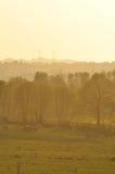 Cows.fields y árboles en la oscuridad Foto de archivo