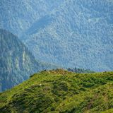 Cows graze on mountain slope. Krasnaya Polyana, Sochi, Caucasus, Russia. royalty free stock image