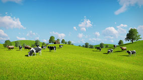 Cows graze on the open green meadows. Herd of cows graze on the open green meadows at spring day. Realistic 3D illustration was done from my own 3D rendering stock illustration