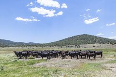 Free Cows Grazing At The Meadow Stock Photos - 188946173