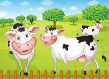 Cows grazing in farm. Illustrtion of cows grazing in green farm Royalty Free Stock Image
