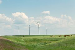 Cows grazing in a green meadow surrounded by windmills Royalty Free Stock Photos