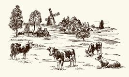 Cows grazing on meadow. Hand drawn illustration Royalty Free Stock Images