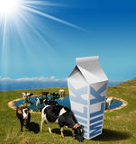 Cows Grazing with Milk Beverage Carton Stock Photo