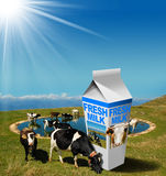 Cows Grazing with Milk Beverage Carton Stock Photography