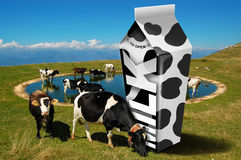 Cows Grazing - Milk Packaging Royalty Free Stock Photography