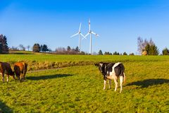 Free Cows Grazing On Meadow And Wind Turbines In Background Rural Lan Royalty Free Stock Images - 105389049