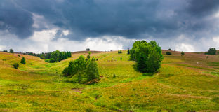 Cows grazing in Semenic Mountains Royalty Free Stock Images