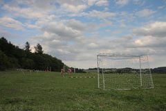 Cows grazing on a summer pasture between football goal Royalty Free Stock Images