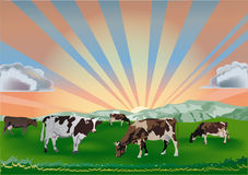 Cows on green field at sunset Royalty Free Stock Image