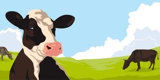 Cows on a green grass Stock Photos