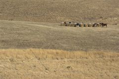 Cows and Hay Bales in Random Rural Field, Fleurieu Peninsula, SA. Random rural field, covered in dry brittle summer grass, a single row of large round hay bales Royalty Free Stock Photography