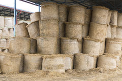 Cows and hay in the barn Royalty Free Stock Photo
