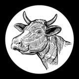 Cows head. Hand drawn in a graphic style. Isolated on white background royalty free illustration