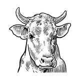 Cows head. Hand drawn in a graphic style. Royalty Free Stock Photography