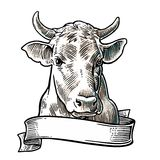 Cows head. Hand drawn in a graphic style.  Stock Photography
