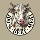 Cows head. 100 percent beef meat lettering. Vintage vector engraving. Cows head. 100 percent beef meat lettering. Hand drawn in a graphic style. Vintage color Royalty Free Stock Photos