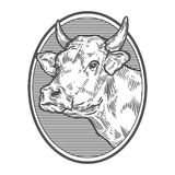 Cows head portrait. Hand drawn sketch in a graphic style. Vintage vector engraving. Illustration for poster, web. Isolated on white background Royalty Free Stock Images
