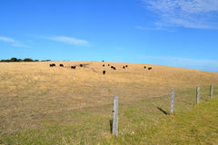 Cow Hill Royalty Free Stock Photo