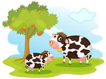 2 cows Stock Photos
