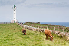 Free Cows In The Road To The Lighthouse Stock Photo - 27479050