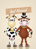 Cows in love Stock Photography