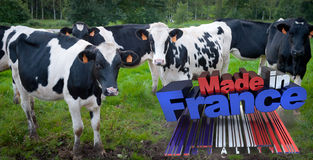 Cows made in France Royalty Free Stock Images