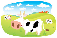 Cows in Meadow. Three cows on a green meadow Royalty Free Illustration