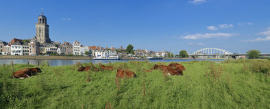 Cows in meadow Stock Photography