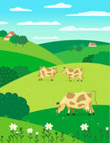 Cows on meadow Stock Images