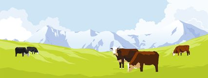 Cows in a meadow. Cows in a grass meadow with mountains Royalty Free Stock Images