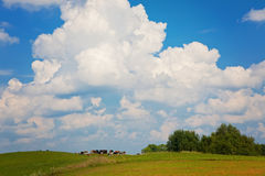 Cows in the meadow Royalty Free Stock Images